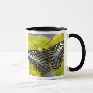 Mug Sammamish, papillon tropical 38 de Washington