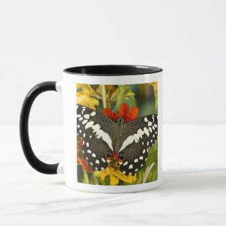 Mug Sammamish, papillon tropical 39 de Washington