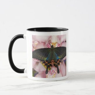 Mug Sammamish, papillon tropical 41 de Washington