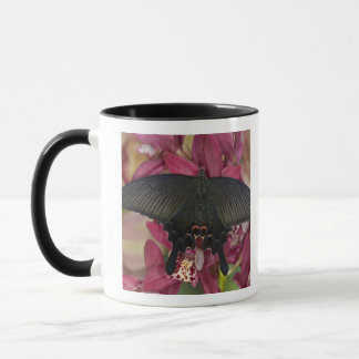 Mug Sammamish, papillon tropical 8 de Washington