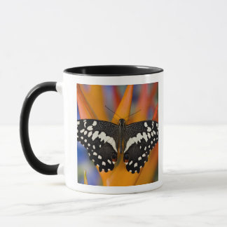 Mug Sammamish, papillon tropical 9 de Washington