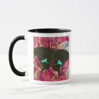 Mug Sammamish, papillon tropical 9 de Washington