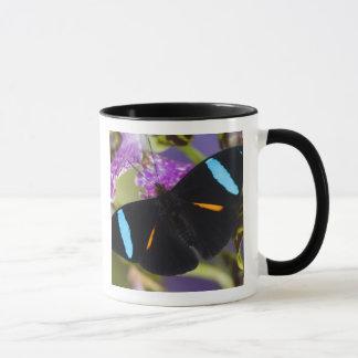 Mug Sammamish, papillon tropical de Washington