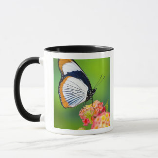 Mug Sammamish, Washington. Papillons tropicaux