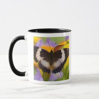 Mug Sammamish, Washington. Papillons tropicaux 27