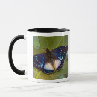 Mug Sammamish, Washington. Papillons tropicaux 28