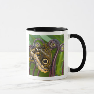 Mug Sammamish, Washington. Papillons tropicaux 31