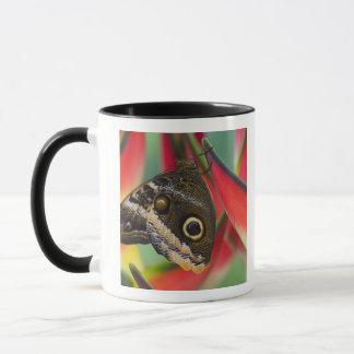 Mug Sammamish, Washington. Papillons tropicaux 32