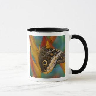 Mug Sammamish, Washington. Papillons tropicaux 33