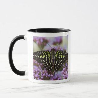Mug Sammamish, Washington. Papillons tropicaux 43