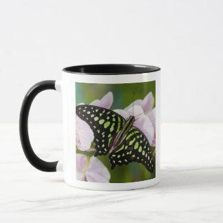 Mug Sammamish, Washington. Papillons tropicaux 46