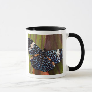 Mug Sammamish, Washington. Papillons tropicaux 54