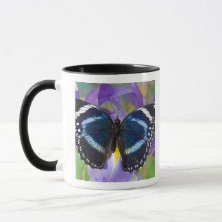 Mug Sammamish, Washington. Papillons tropicaux 57