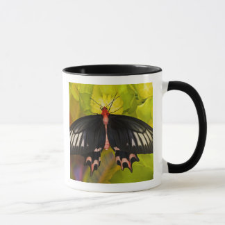 Mug Sammamish, Washington. Papillons tropicaux 9