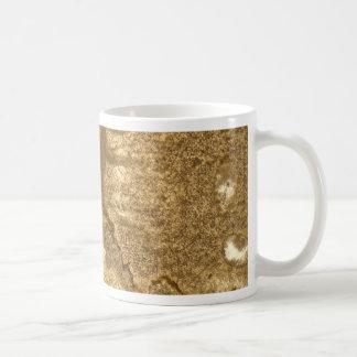 Mug Section mince de carbonate triassique sous le