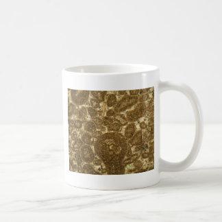 Mug Section mince de chaux paléozoïque sous la MICR