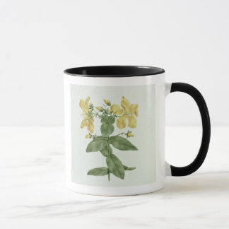 Mug Sensation-Effort (quartinianum de Hypericum) (la