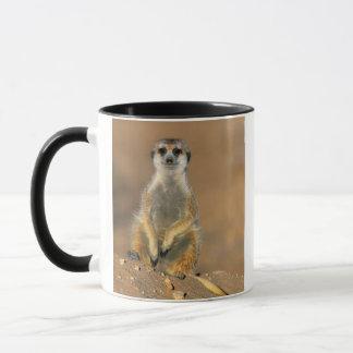 Mug Sentinelle de Meerkat (Suricata Suricatta) au