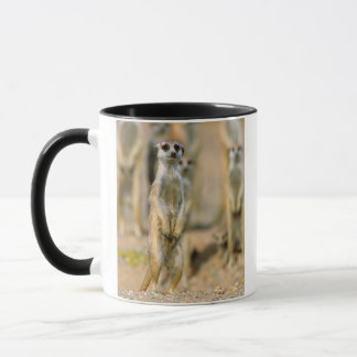 Mug Sentinelles de Meerkat (Suricata Suricatta), Karas