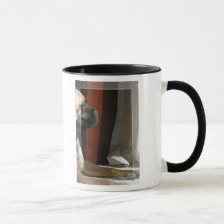 Mug Sphinx de Bullmastiff