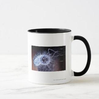 Mug Structure d'une cellule de pylores de hélicobacter