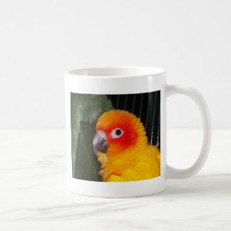 Mug Sun Conure
