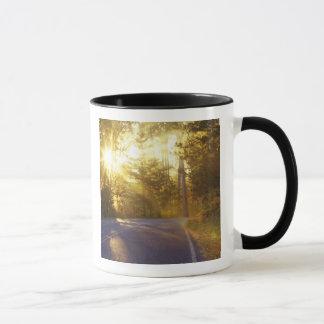 Mug Sun éclate par la forêt sur la chaussée à
