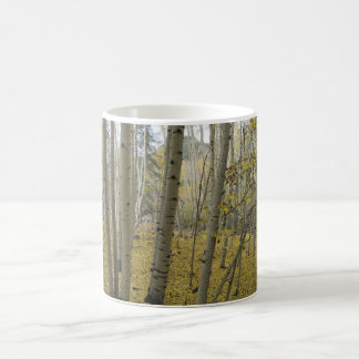 Mug Tapis d'or sous un verger du tremblement Aspen