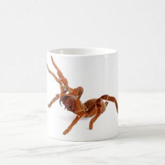 Mug Tarantula. du Roi Baboon