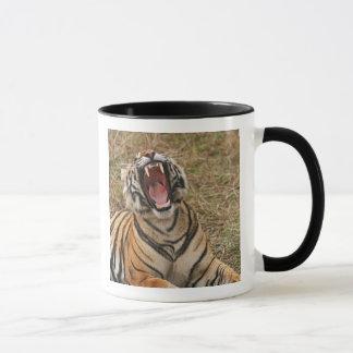 Mug Tigre de Bengale royal baîllant, Ranthambhor