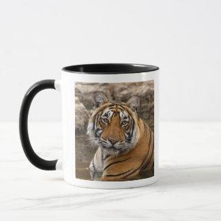 Mug Tigre de Bengale royal dans l'étang de jungle,