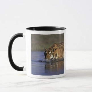 Mug Tigre de l'ASIE, Inde marchant par l'eau 2