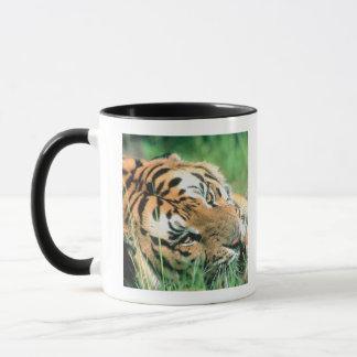 Mug Tigre se situant dans l'herbe