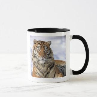 Mug Tigre sibérien, altaica du Tigre de Panthera, Asie