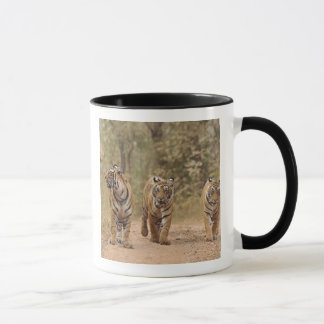 Mug Tigres de Bengale royaux sur la voie, Ranthambhor