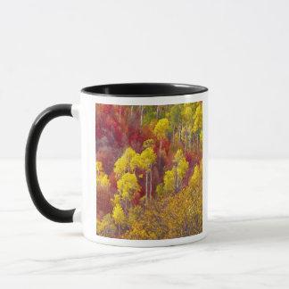 Mug Trembles colorés en canyon Utah de Logan dans les