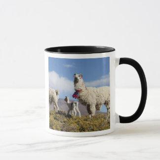 Mug Troupeau décoré de lama dans le Puna, montagnes 3