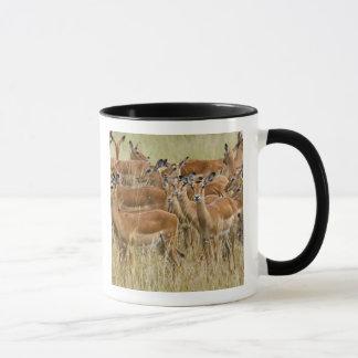 Mug Troupeau d'impala femelle, masai Mara, Kenya