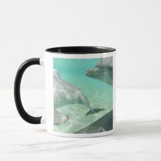 Mug Truncatus de Tursiops de dauphins de Bottlenose)