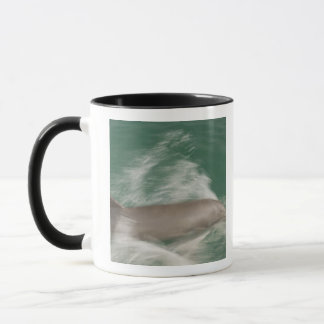 Mug Truncatus de Tursiops de dauphins de Bottlenose)