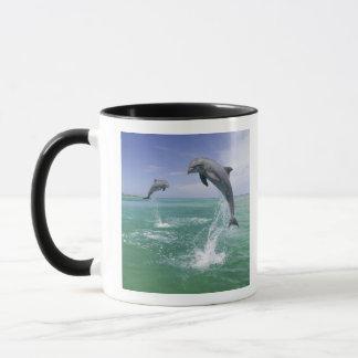 Mug Truncatus de Tursiops de dauphins de Bottlenose) 4
