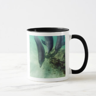 Mug Truncatus de Tursiops de dauphins de Bottlenose) 5