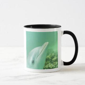 Mug Truncatus de Tursiops de dauphins de Bottlenose) 7