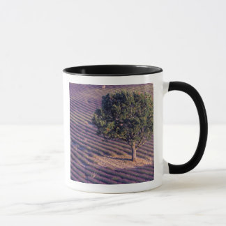 Mug UE, France, Provence, lavande met en place