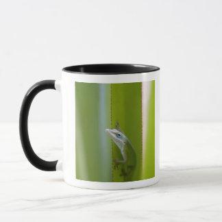 Mug Un anole vert est un lézard arborescent