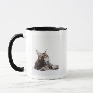 Mug Un chaton de chat de ragondin du Maine