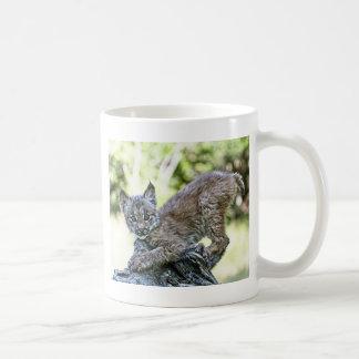 Mug Un chaton espiègle de Lynx de Canadien