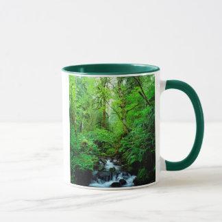 Mug Un courant dans une forêt de peuplement vieux