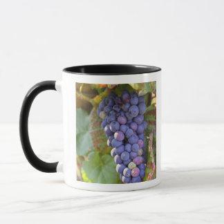 Mug Un groupe de raisins de pinot noir dans un