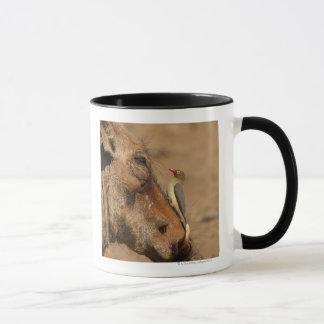 Mug Un Oxpecker sur un museau de warthogs,